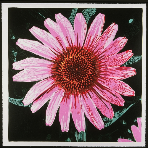 Cone Flower » Woodcut
