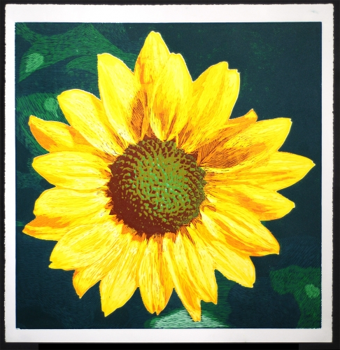 Sunflower » Woodcut